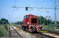 gecoxx-110703verdello.jpg